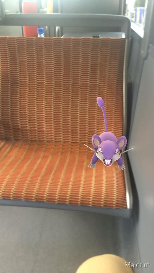 Rattata cède volontiers sa place quand quelqu'un en a besoin (photo Matthieu Lefebvre)